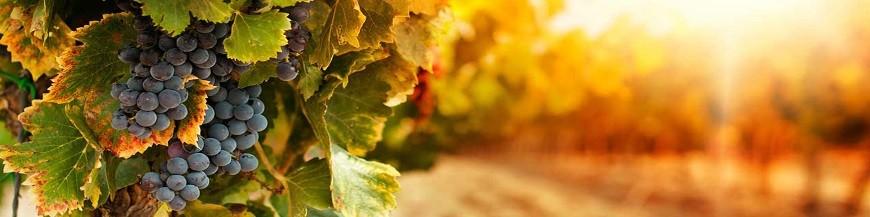 Irrigation Vigne